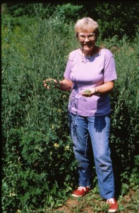 Linda picking lamb's quarters in the early days.